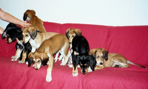 Nine on a Sofa?