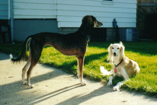 Dusty and Zahrah, Summer 2000