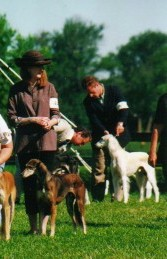 Beginning Best of Breed Judging